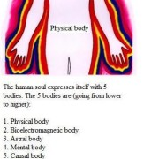 Bodies of human being